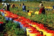 Набираем работников на сбор овощей и фруктов - 2017