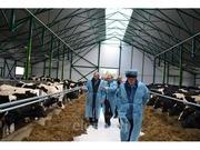 Работа в Германии на ферме